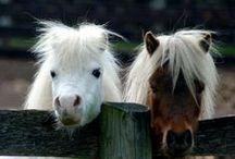Ponies / We love Ponies!