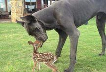 Animals are Amazing