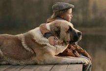 Cão... um amigo