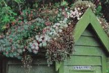 Gardening / by Judy Donohue