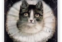 Cat <3 / by Christa McClellan