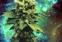 420 / by Bill Ruhl