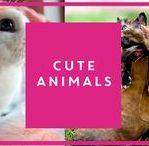 Ridiculously cute animals / Sometimes all we want to do is stare at photos of cute animals, okay? From kittens to puppies, here's some of our favourites...