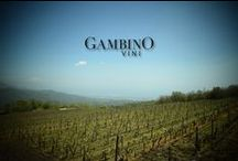 Gambino Vini / Gambino Winery - Linguaglossa - Sicily - Italy - No SPAM! - Please send an email to social@vinigambino.it for to be invited