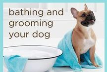 Dog care tips!