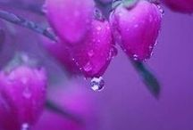Pretty flower.  Water Droplets / 물방울세계