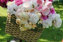 fiori e bicy