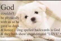 Dog Quotes Собака котировки / I speak for the dogs. Я говорю для собак.