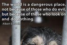 Against Animal Abuse Против жестокого обращения с животными