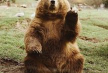 Bear story's