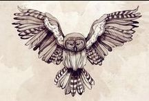 buhos , owls