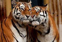 Animals / Foto animali