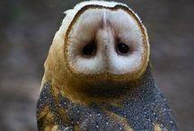 Owls - Piercing ur soul with a single glance