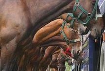 Equestrian / by Jillian Draaisma