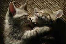 Sweet animals :3