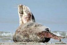Seals / Seals