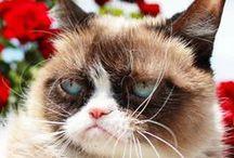 Tardar Sauce / Tardar Sauce, the Grumpy Cat