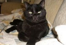 My cat Carbon / My love Karbon / Aşkım, yakışıklı oğlum Karbon'un fotoları
