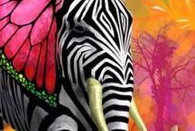 Animals Footprint...