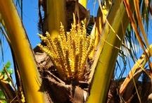 Flora Trinidads