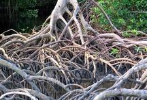 Trinidads natürliche Vielfalt