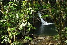 Trinidads Regenwald