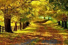 Hazan / Sonbaharı çok seviyorum....