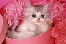 Kočičí výšivky