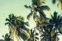 Palm Tree Lovers