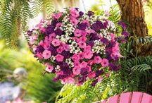 Flower Garden Ideas & Crafts / by Judy Horvath