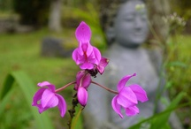 indonesian flowers / We've added lots of travel insights to our website. http://www.expatexplorers.org/