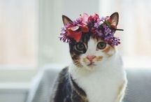 Crazy Cat Ladies   Julisa / Funniest & cutest cat pics! #CatsRuleTheWorld