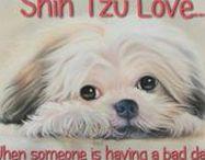 Shih Tzu Mama / All about those Shih Tzu babies!  MOM of 2 black / white shih tzu's!