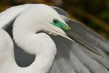 Birds (photos) / Фотографий птиц из клип-артов