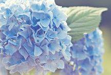 Flowers / by Linda Hammerås Skuseth