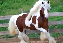 Horses / by Melani Ricks