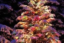 Christmas Trees / by Jennifer Lawson