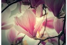 Nature Pictures <3 / Stunning Nature Pictures  / by Jacquelyn Thompson