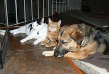 My Furbabies / Winnie, Mila, Eddie and Miss Kitty are my furbabies. I can't imagine life without them.