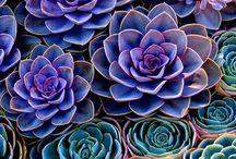 lovegrows / succulent plants and potting ideas