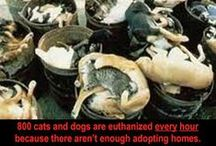Animal cruelty (WARNING: unpleasant images) / I used to have these images on the World's people against Democide board but I no longer wanted this rather graphic stuff on there so I created a separate board. If you are squeamish, have a weak stomach or otherwise sensitive, I don't recommend coming here.