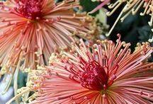 foto kwiat