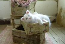 =^..^= ♥  Chats miniatures  ♥ =^..^= / Chats fabriqués à l'échelle 1/12