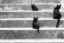 poezen/katten