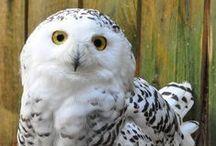 Les animaux et forces de la nature / Plus de 1000 animaux sauvages et de ferme, plus de 600 oiseaux de 70 espèces différentes et environ 180 naissances par an !