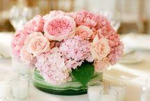 Wedding Ideas: Bowden - Shaw  / Ideas for my wedding in Summer 2013