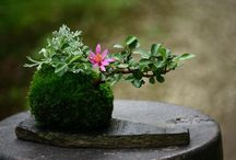 Bonsai / Little trees- inspiration for the beauty in patience and determination