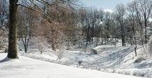 Winter Landscape at The Arboretum / Photos of the Arboretum grounds during winter.