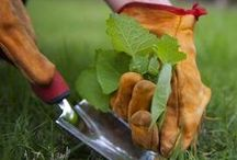Winter Gardening Tips from Pinterest / We have re-pinned some great gardening tips to get you started thinking about your garden.