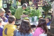 Volunteers / The Arboretum offers service opportunities for all ages!  Contact Lisa Martin at l.martin@reeves-reedarboretum.org or call (908) 273-8787, x1313 / by Reeves-Reed Arboretum